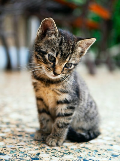 little cat,  Thank you all who downloaded this lovely cat for the likes
