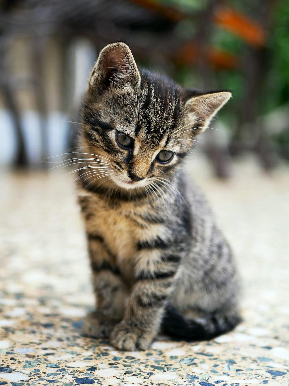 brown tabby kitten sitting on floor