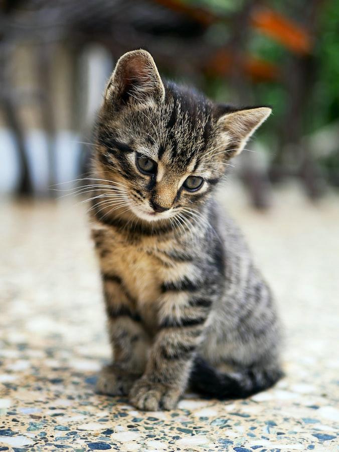 cute cat image hd download
