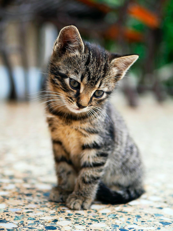 Kitten Wallpapers: Free HD Download 500+ HQ | Unsplash