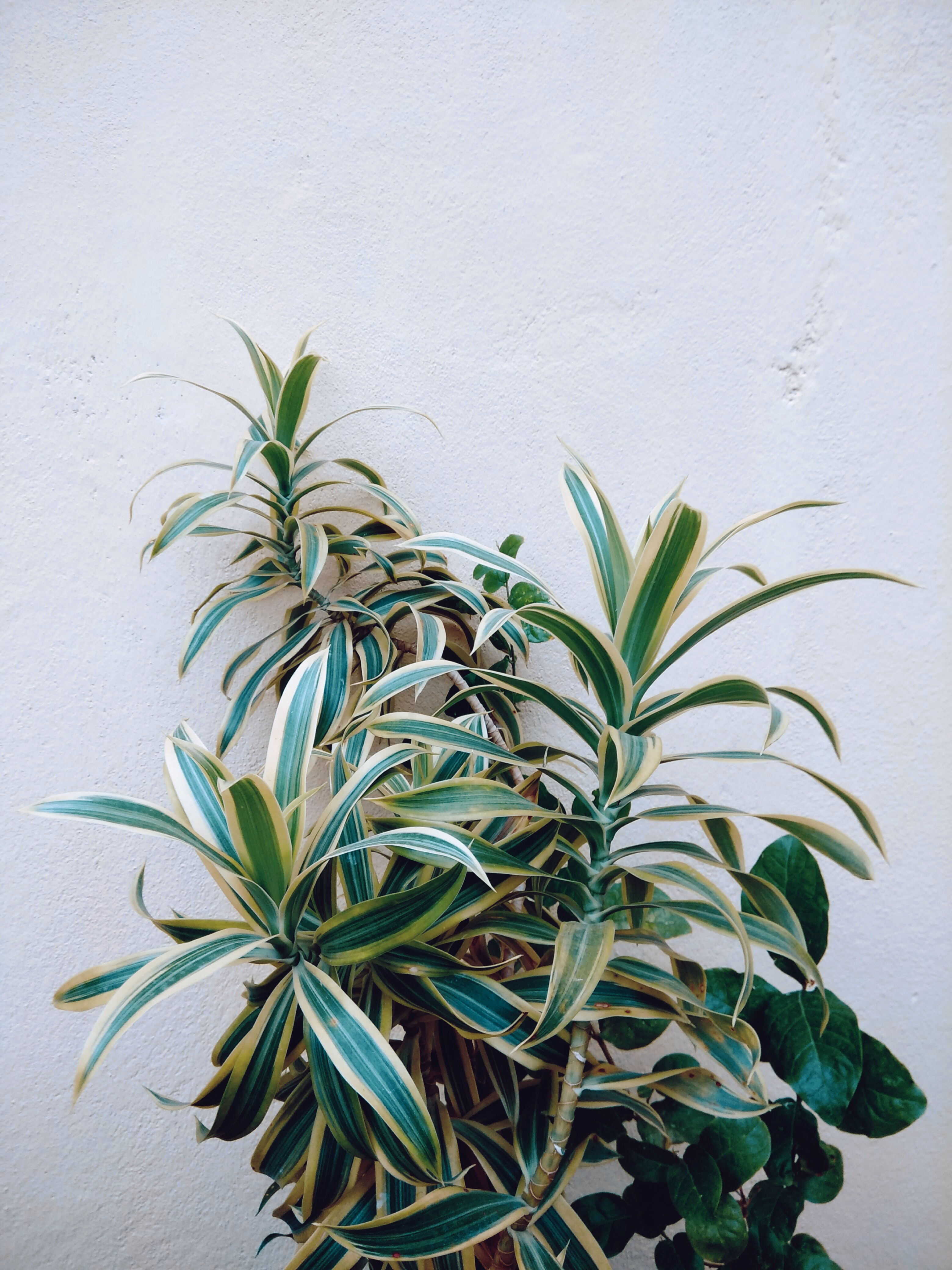 green leafed plant beside wall