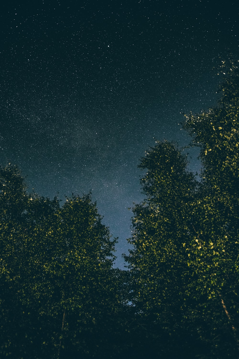 low angle photography of a tall trees with stars as background