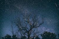 bare tree under Milky Way at night