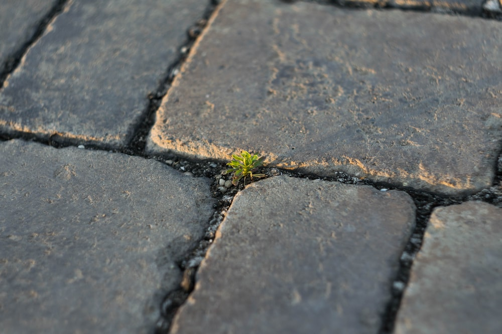 green sprout between concrete bricks