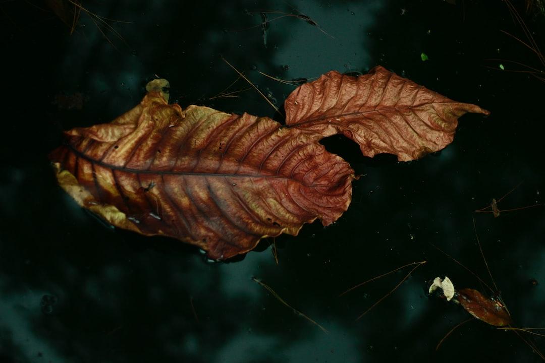 Aku berjalan sangat lambat akhirnya aku menemukan dua daun gugur berdampingan di tepi kolam lumut hijau, lalu aku langsung memotret.