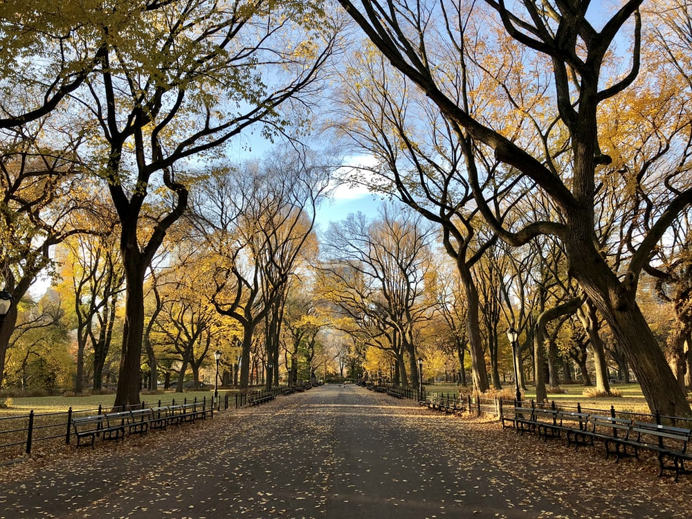 500 central park pictures nyc hd download free images on unsplash