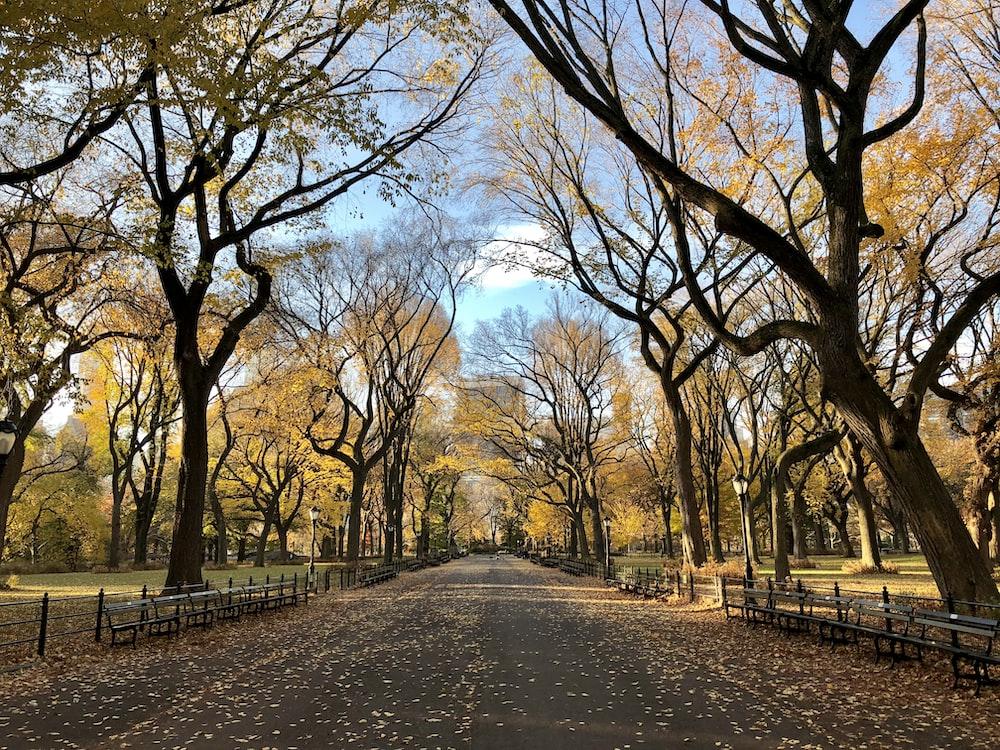 100 Park Pictures Download Free Images On Unsplash