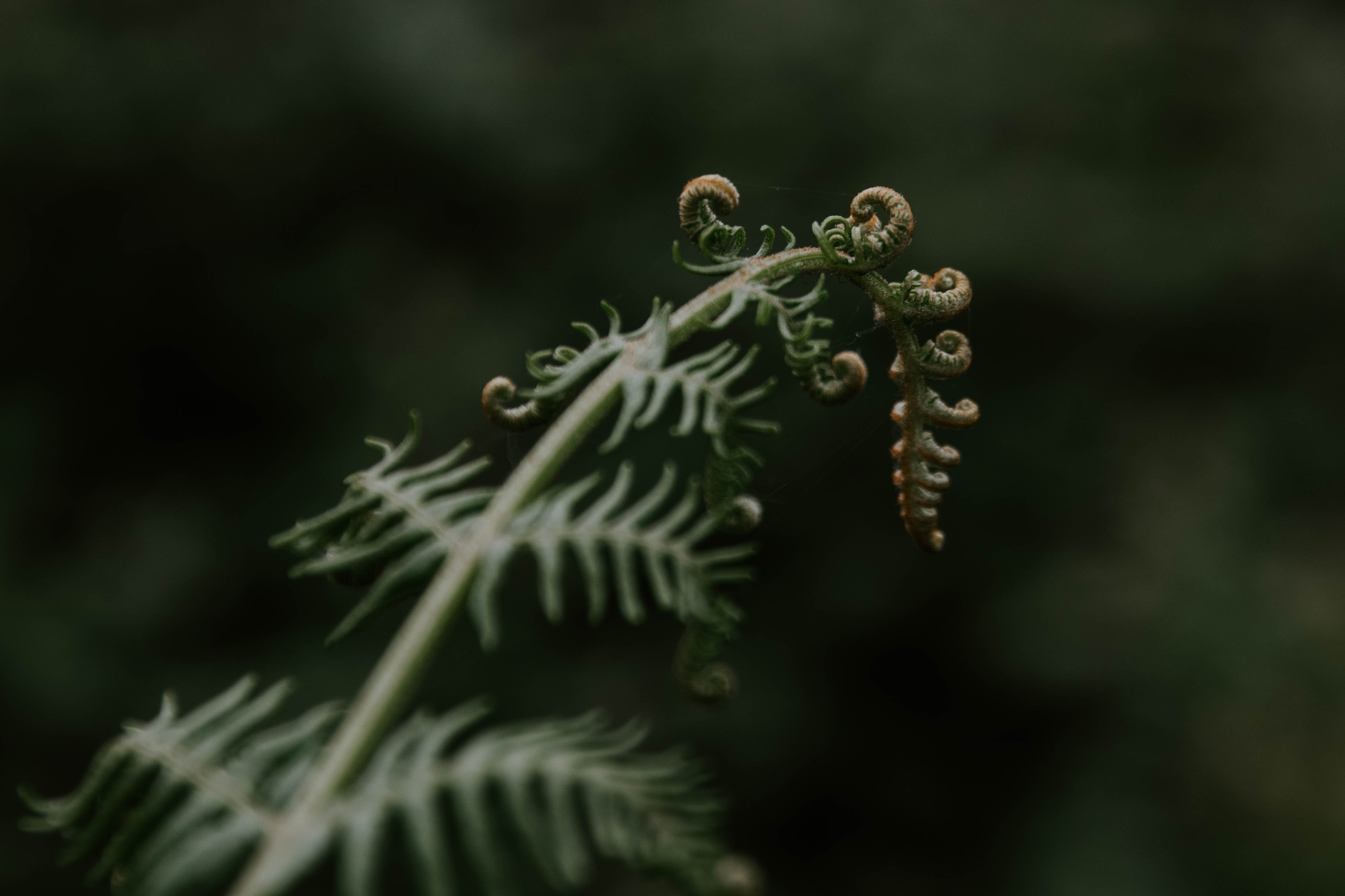 micro photography of green leaf
