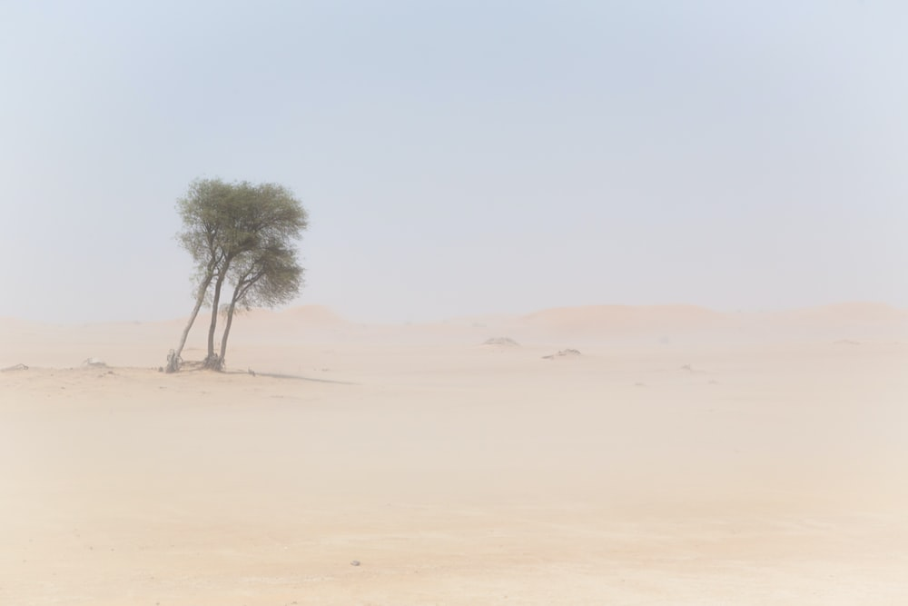 trees on desert at daytime photo