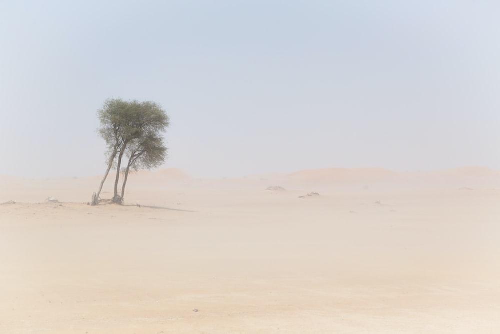 trees on desert at daytime photo