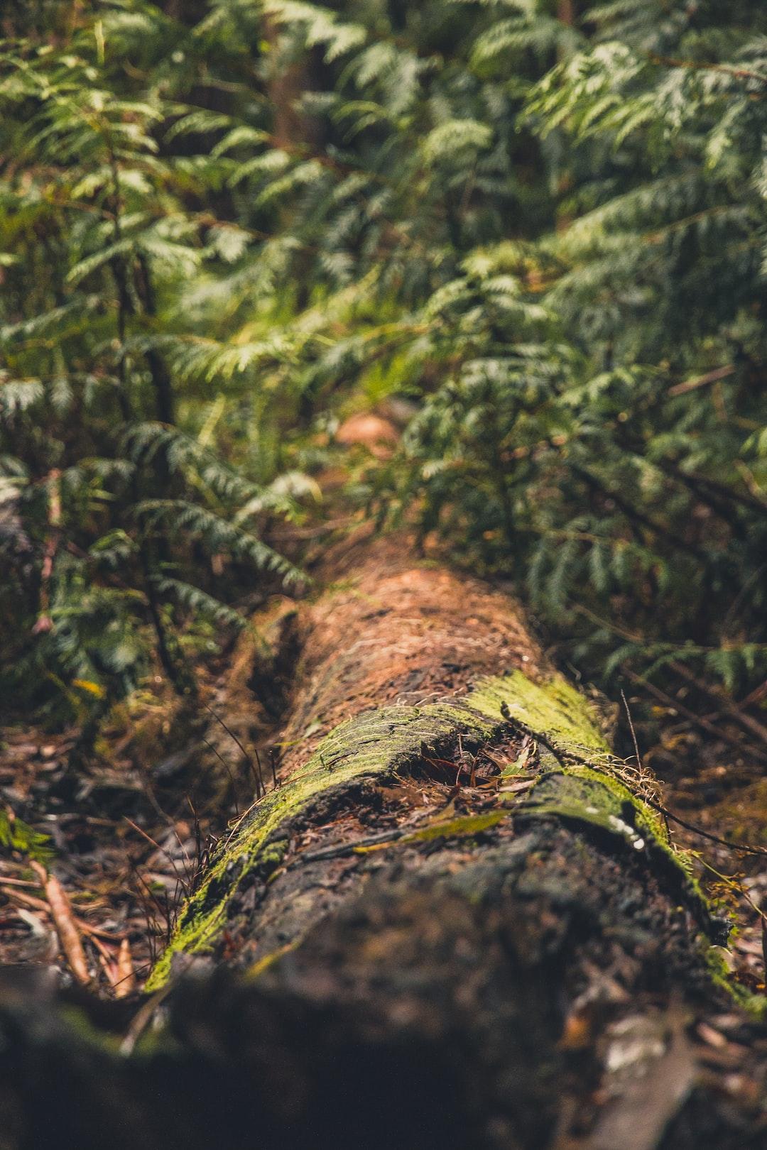 Living Forest Log