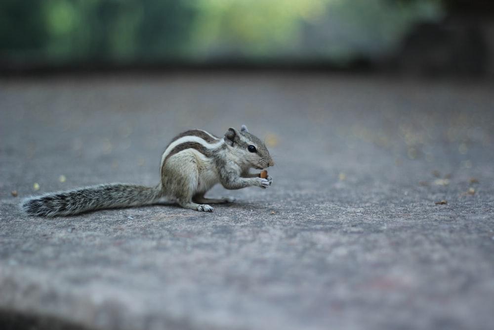 gray squirrel on gray concrete pavement