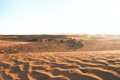 Stara Zagora people lying on desert