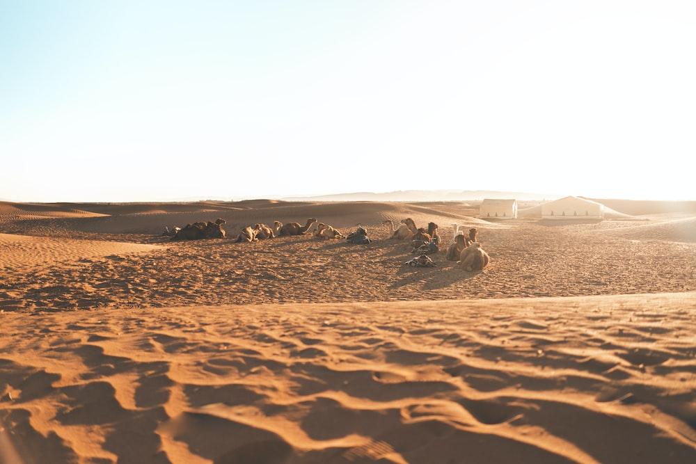 people lying on desert