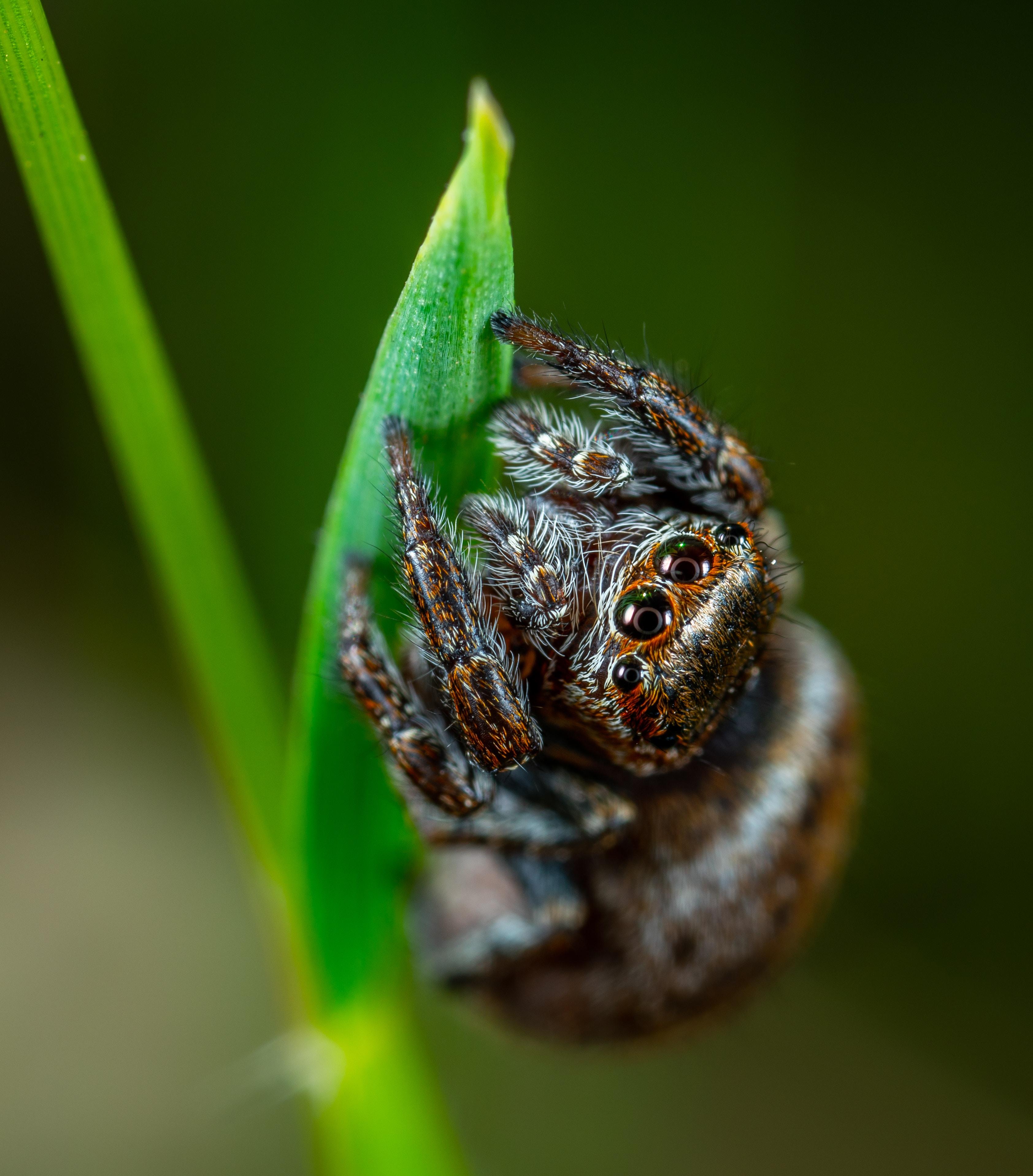 macro shot of brown spider