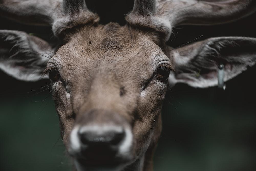 shallow focus photo of deer