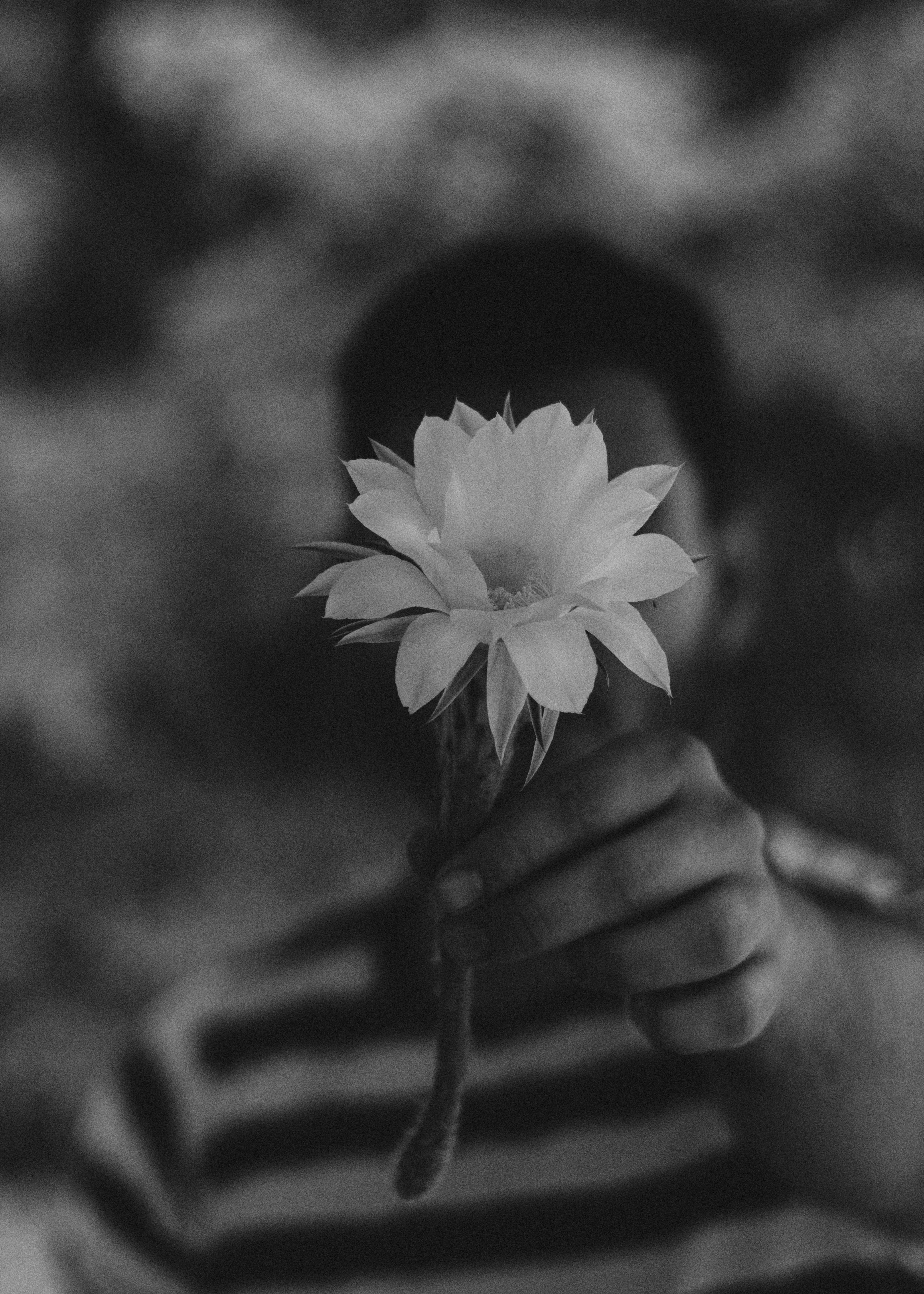 selective focus grayscale photography of person holding petaled flower