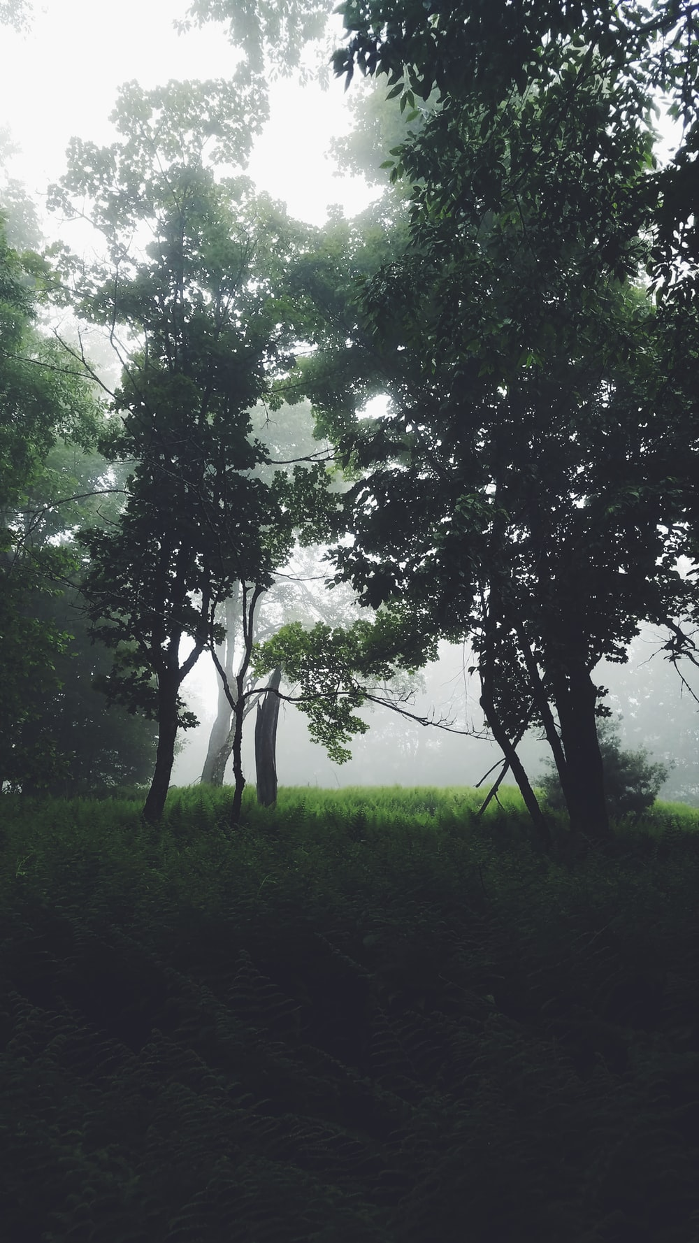 green leafed trees half covered with fogs during daytime photo