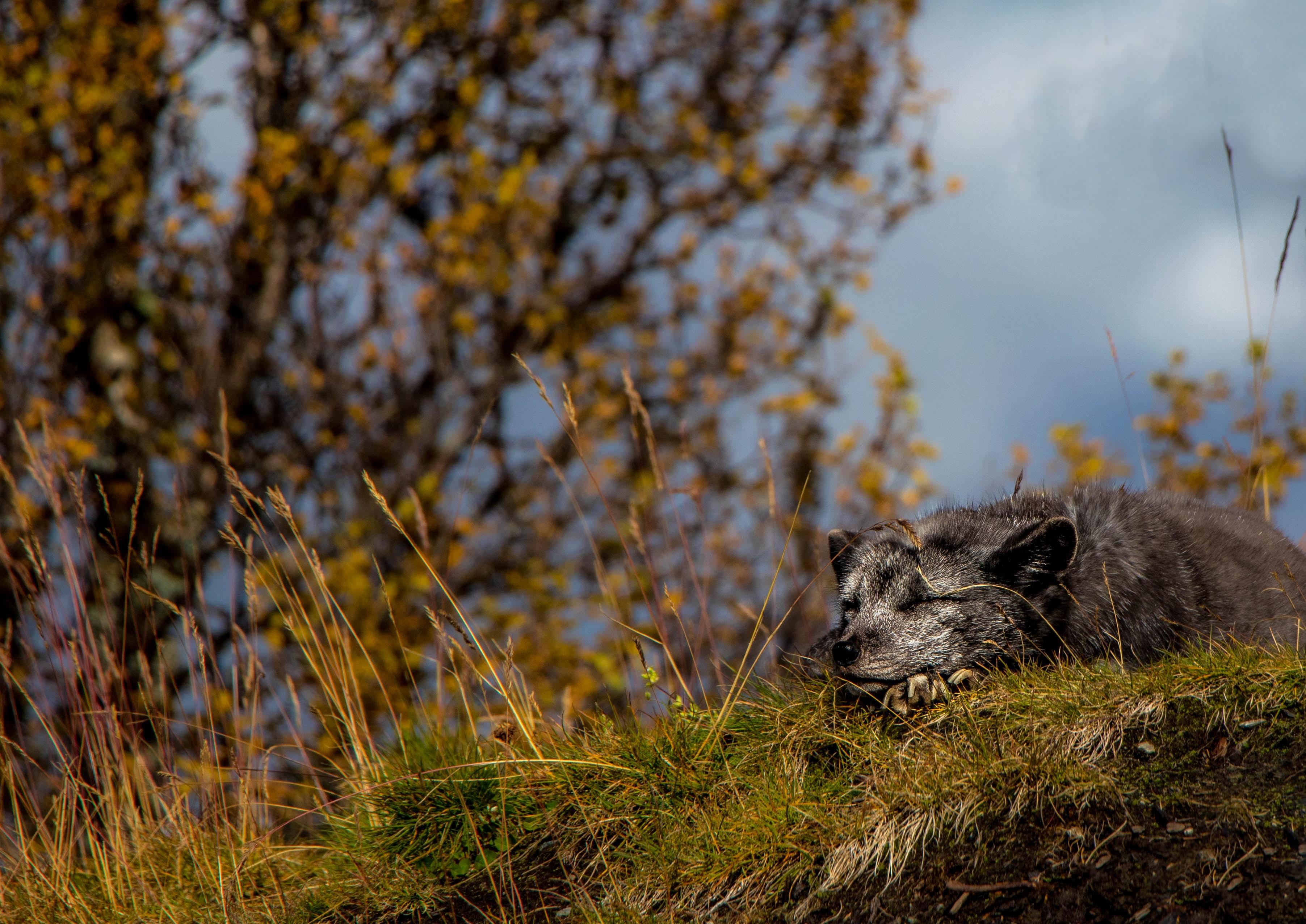 short-coated gray dog under gray sky