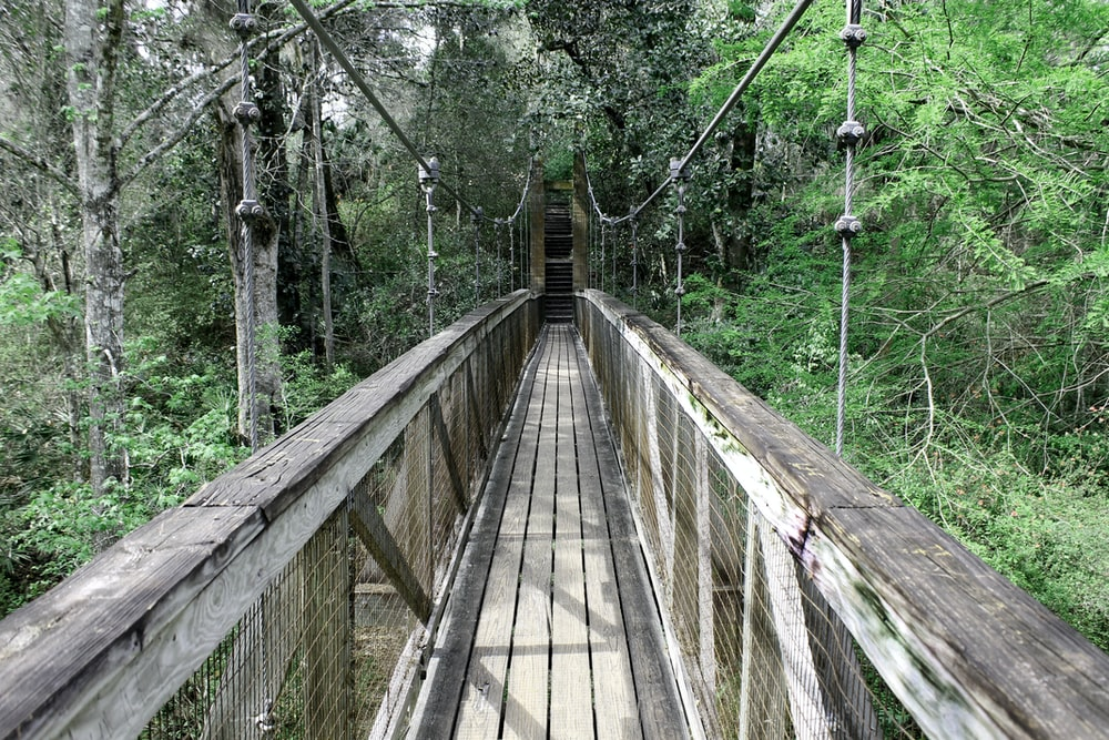 brown wooden bridge near trees at daytime