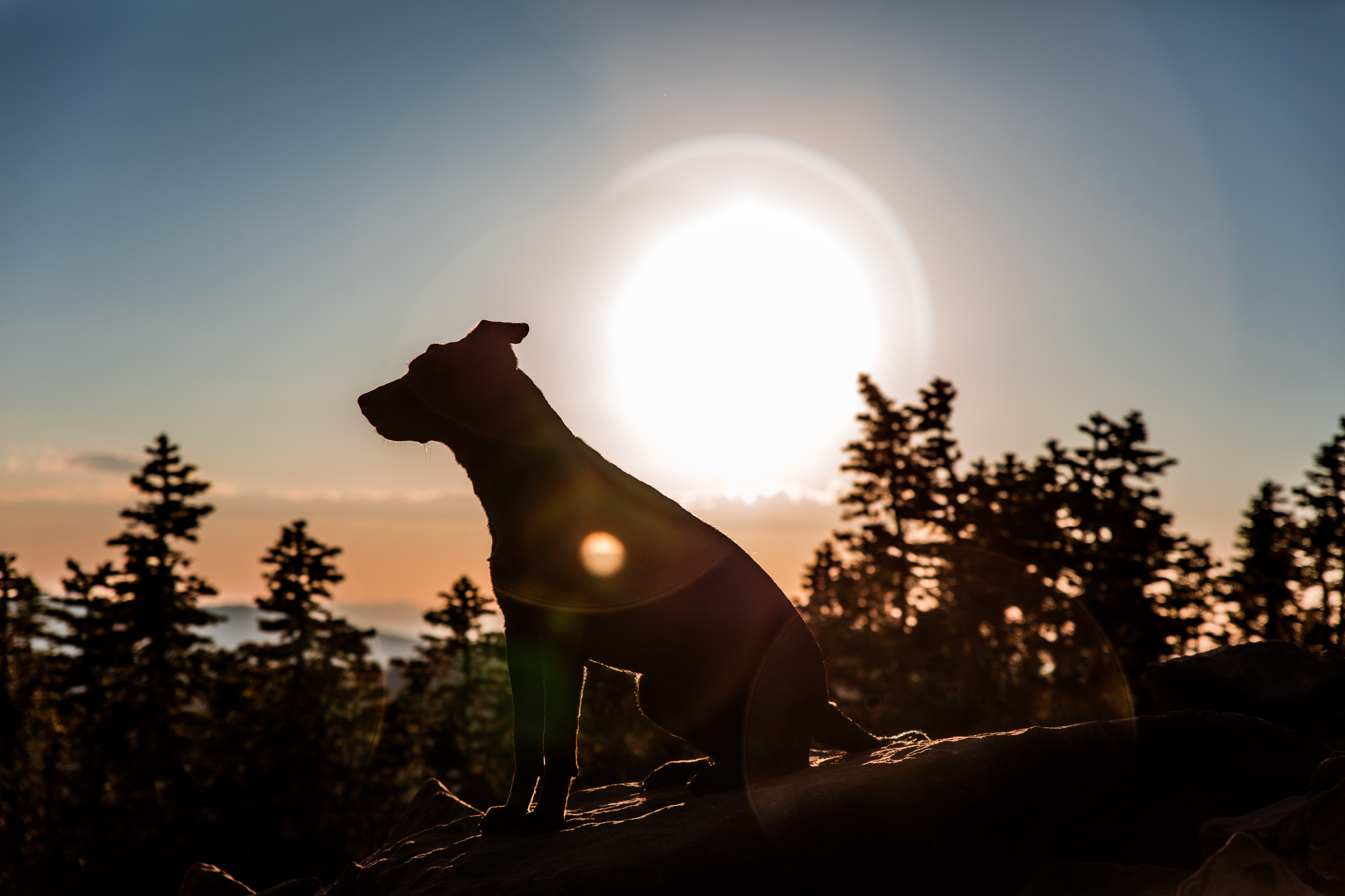 silhouette photo of dog on rock near trees