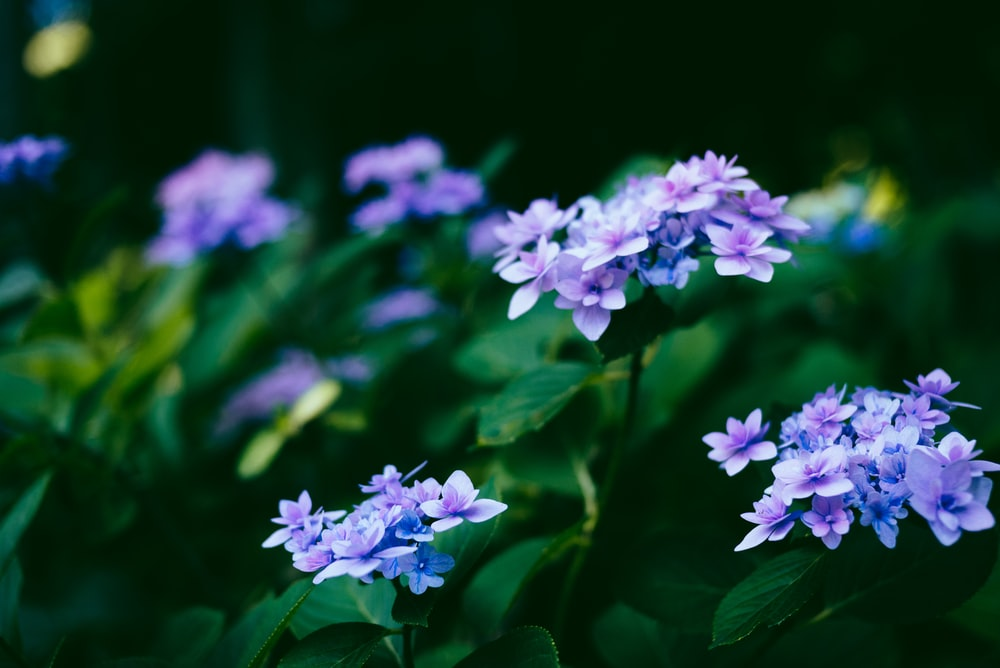 shallow focus photography of blue flowers