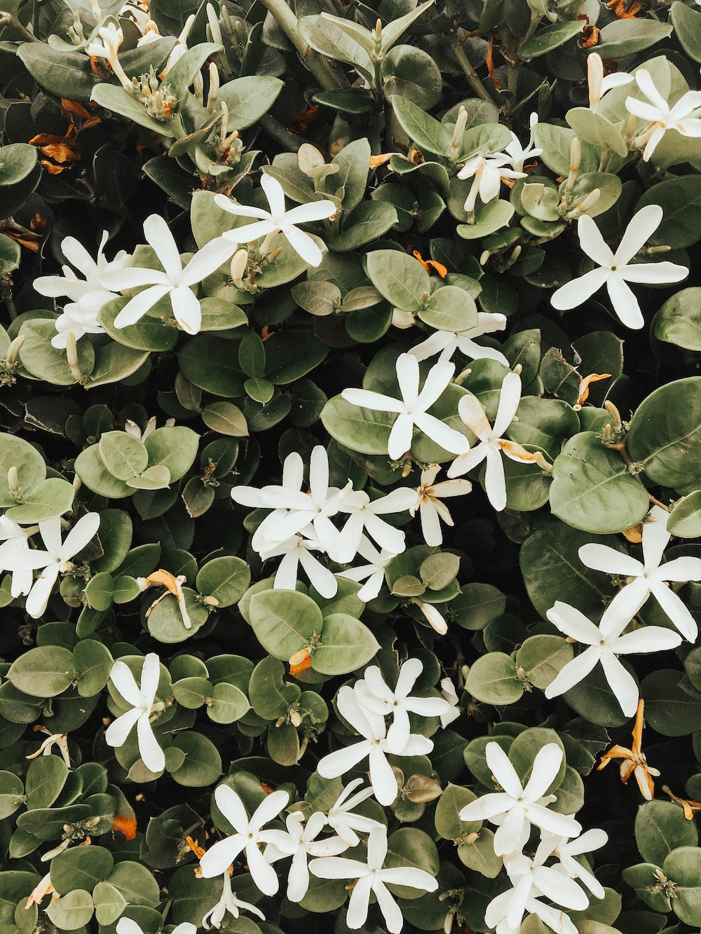 Leafe White Flower Plant And Nature Hd Photo By Abbie Bernet