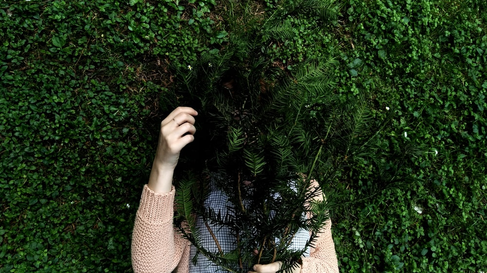person hiding behind green leafed plant