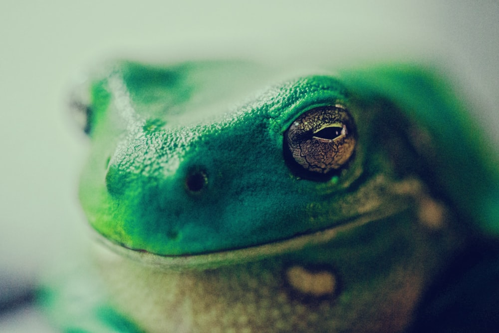 green lizard close up photography