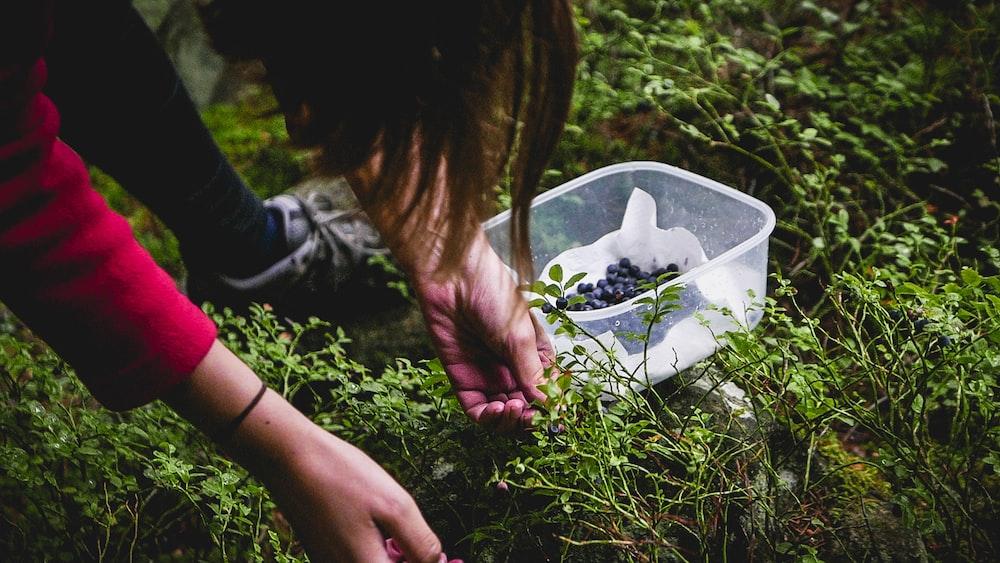 woman picking fruits during daytime