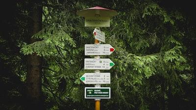 street signs near green tree