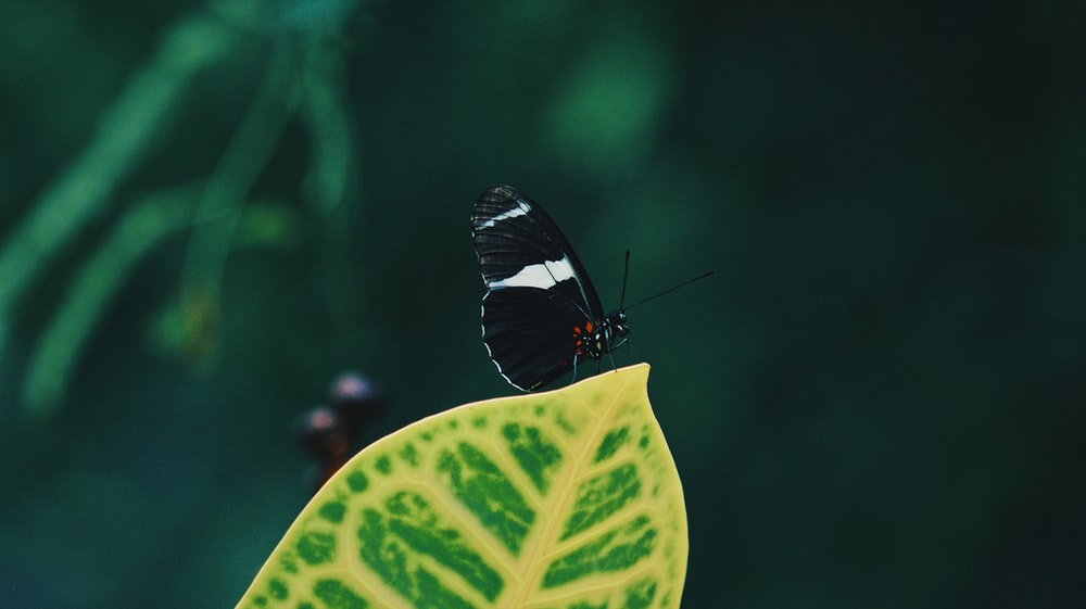 selective focus photography of white admiral butterfly
