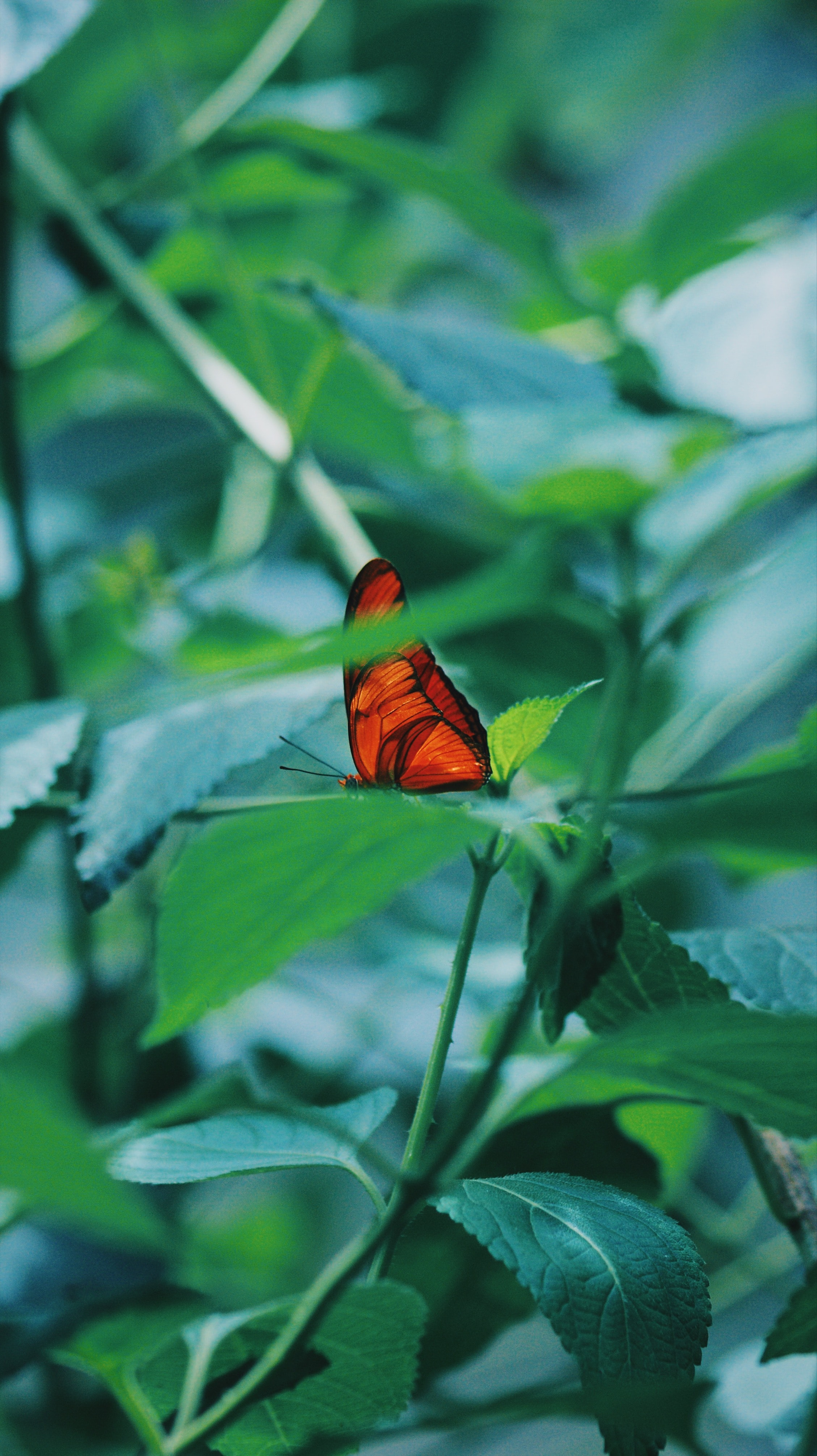 brown butterfly on green leaves