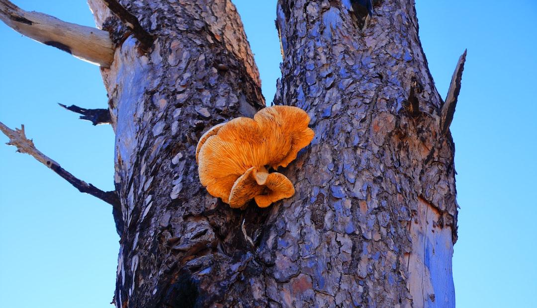 Shroom Bark
