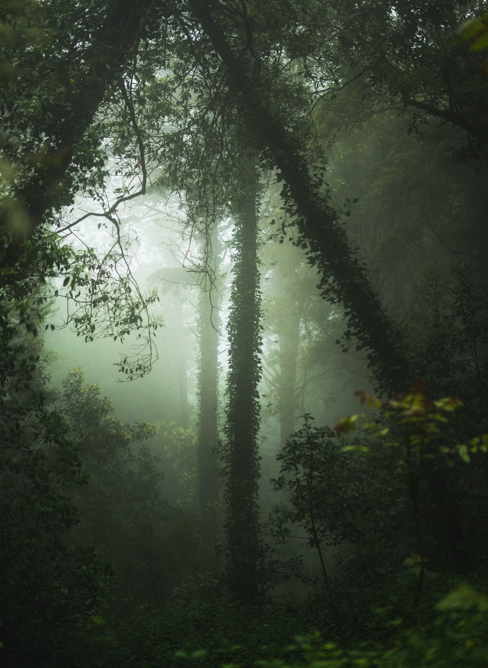 green forest with fogs