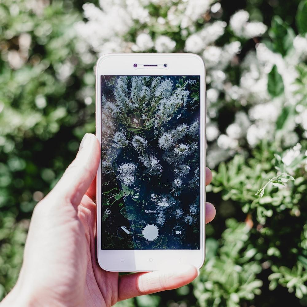 smartphone camera displaying plant