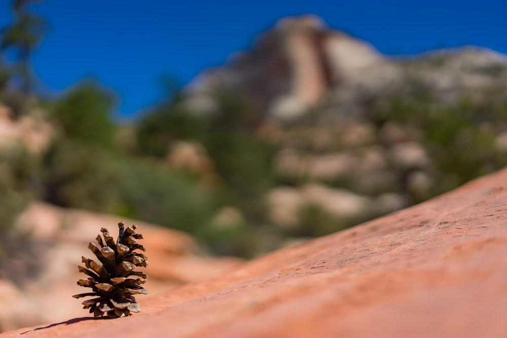 shallow depth of fields photography of pine cone on land