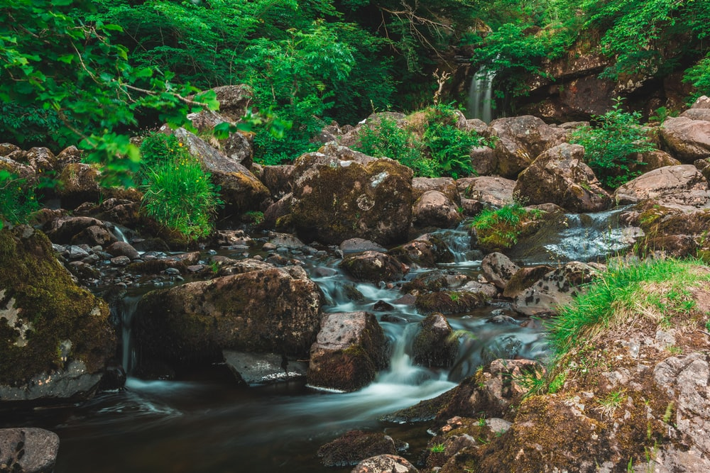 river flows between forest