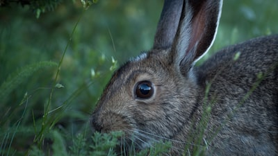 brown rabbit on green grass bunny teams background