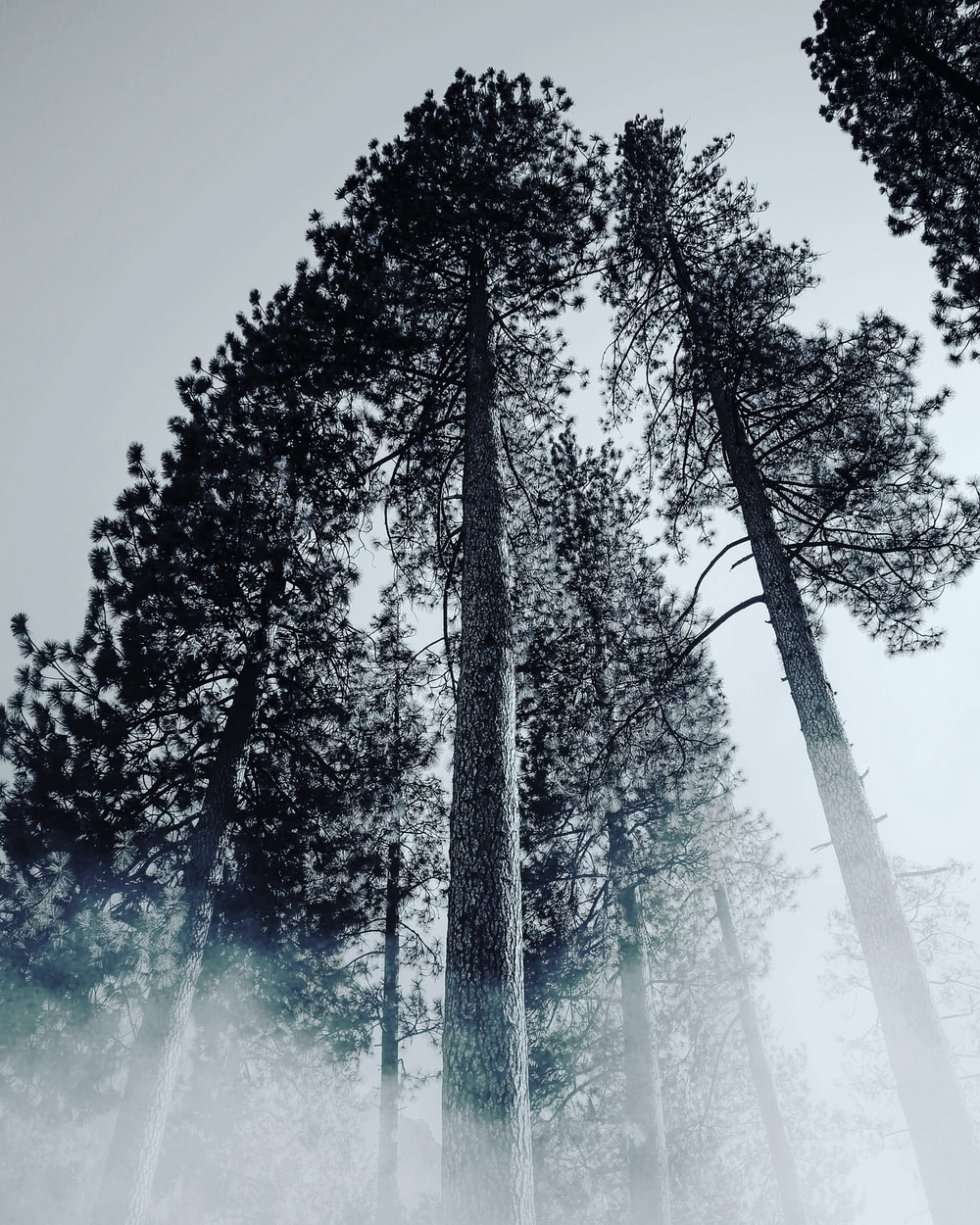 low-angled photography of trees