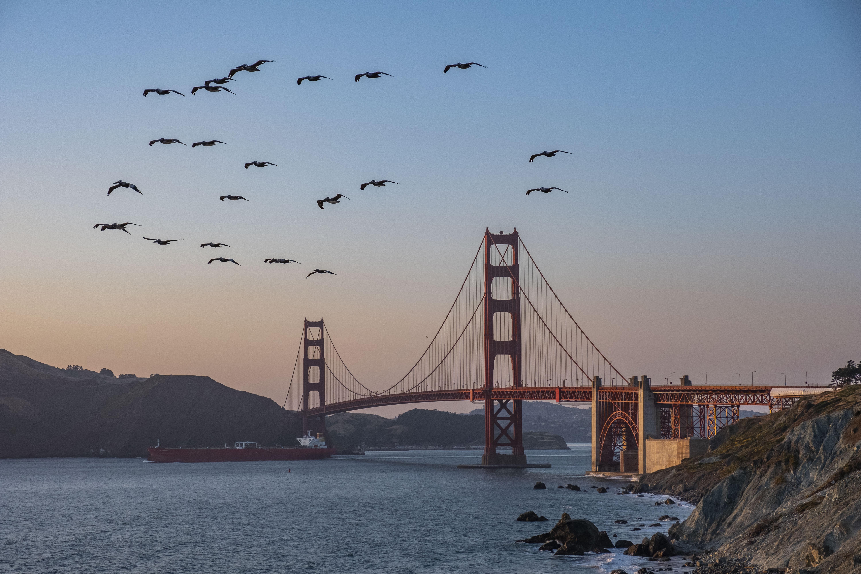 birds in flight above Bosphorus bridge at daytime