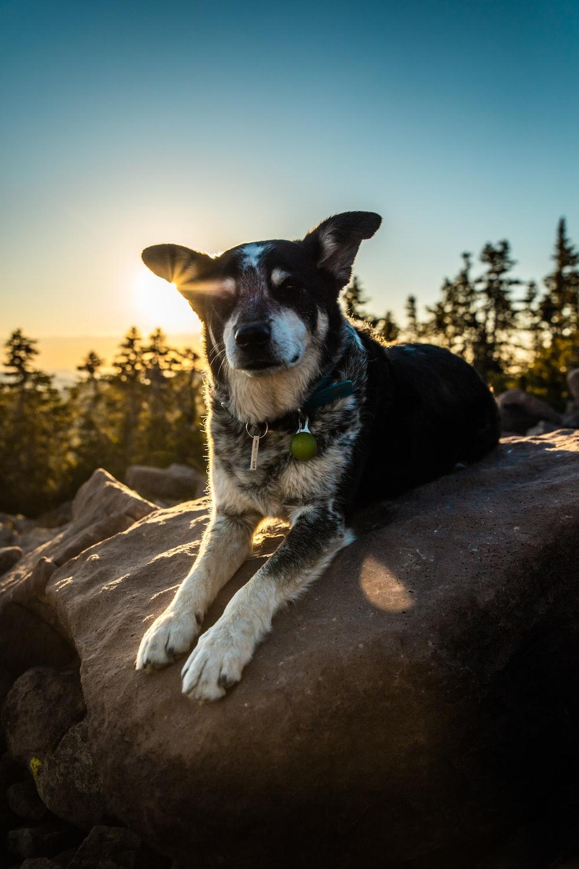 long-coated brown and black dog sitting on grey boulder