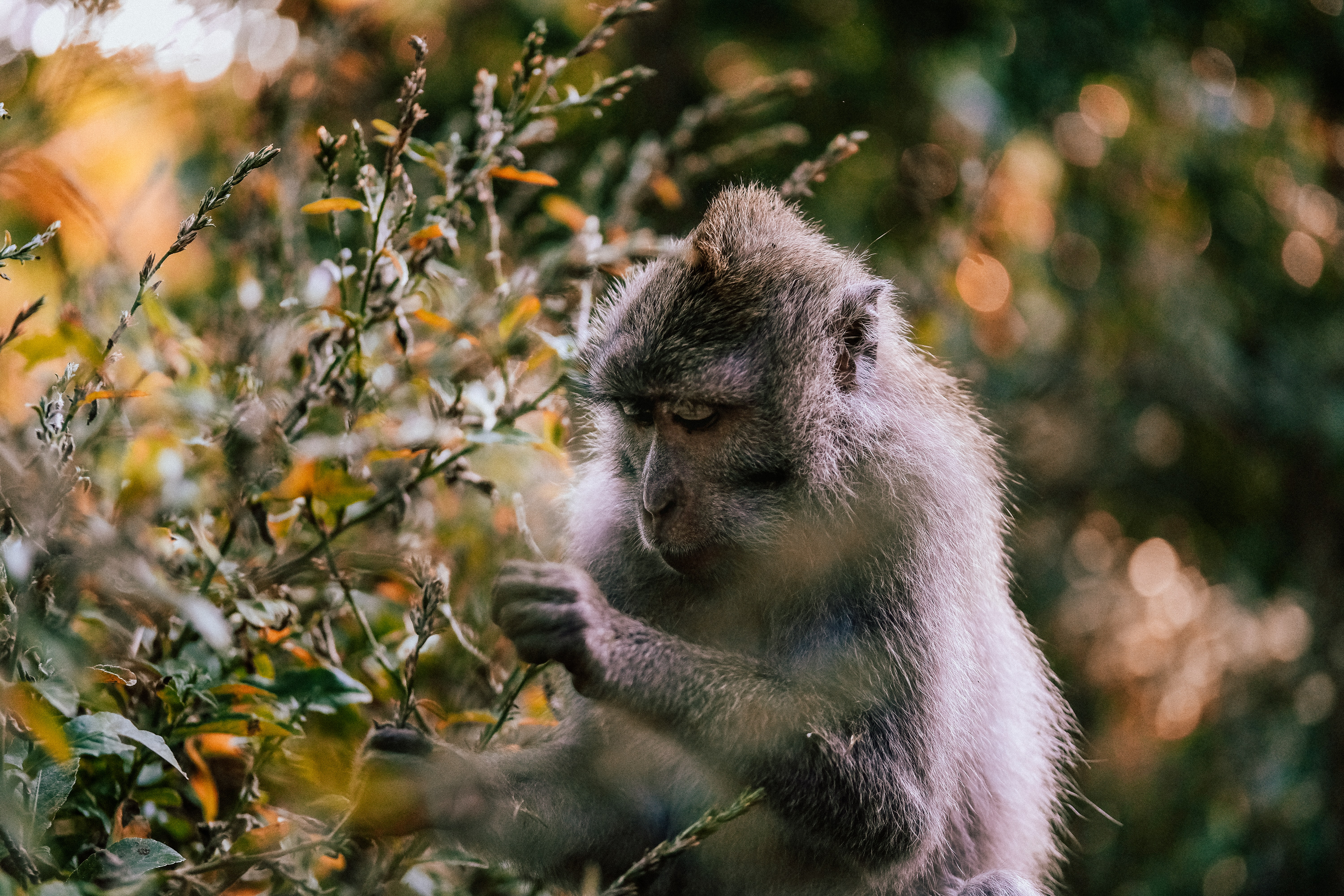 selective focus photography of primate picking leaves