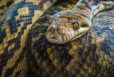 brown snake snake teams background