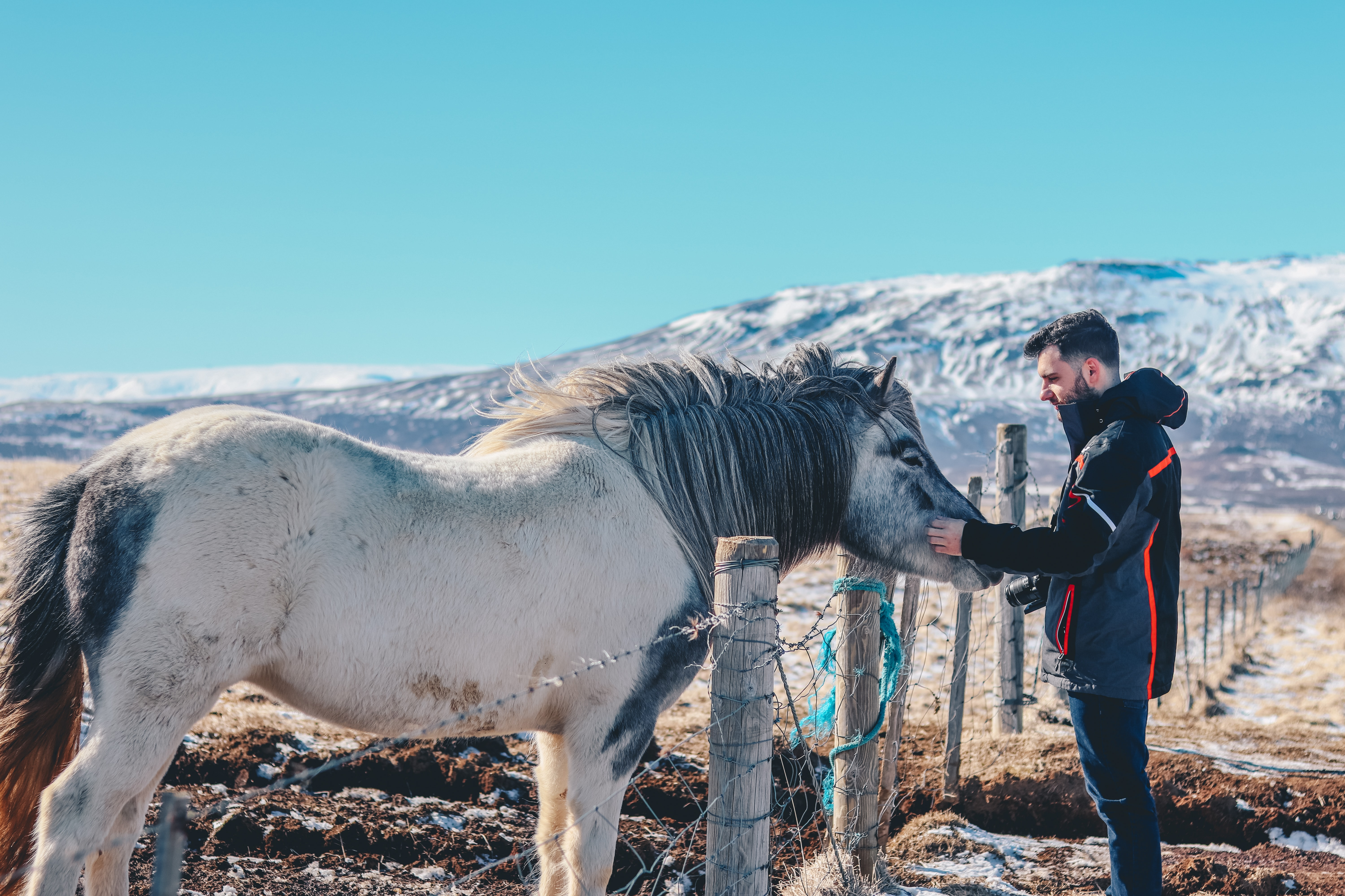 person holding white horse near brown wooden fence under white sky