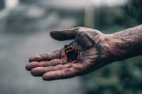 person holding red and black butterfly