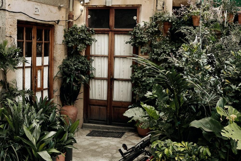 green leaf plants near brown wooden door