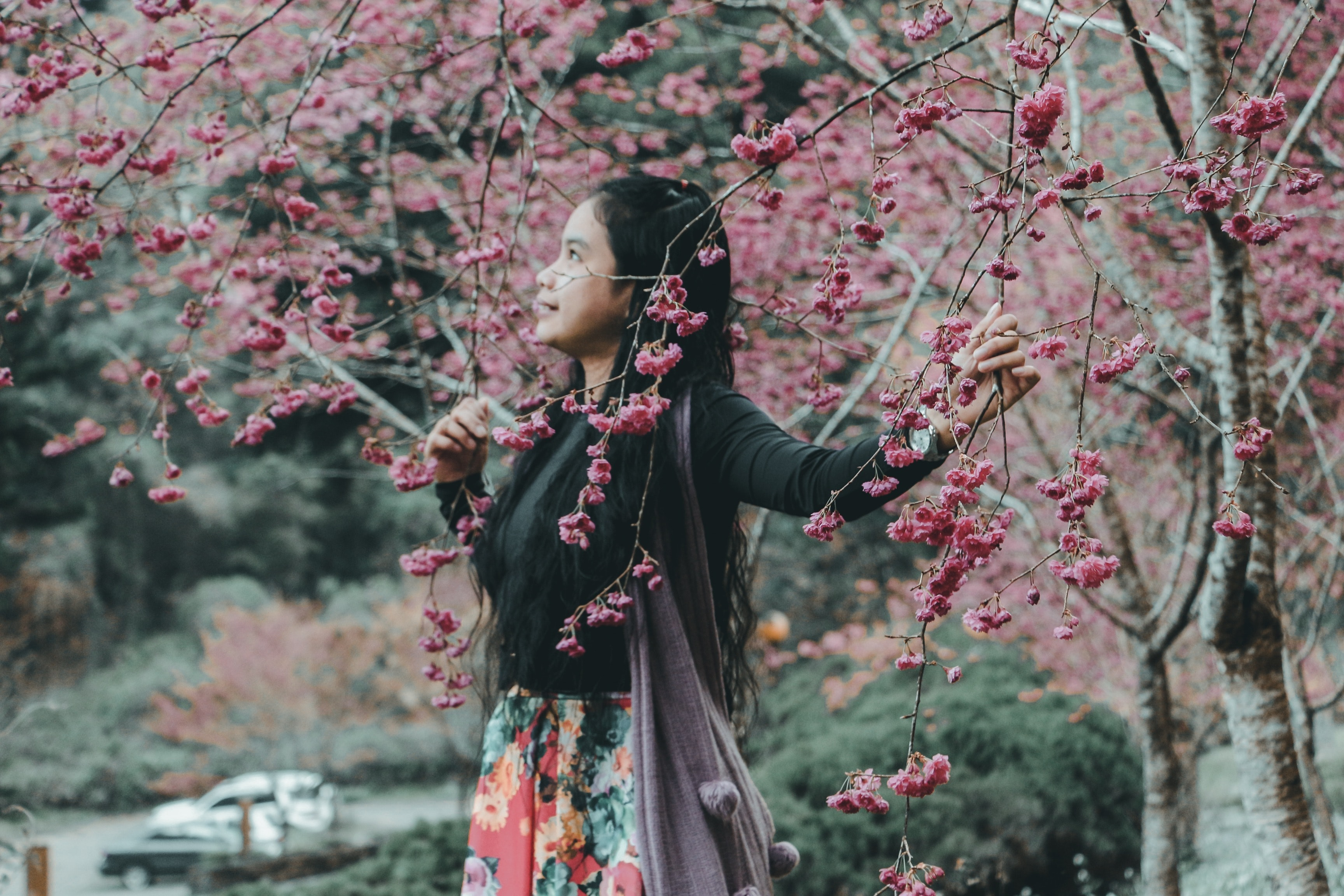 woman standing under the pink cherry blossom tree at daytime