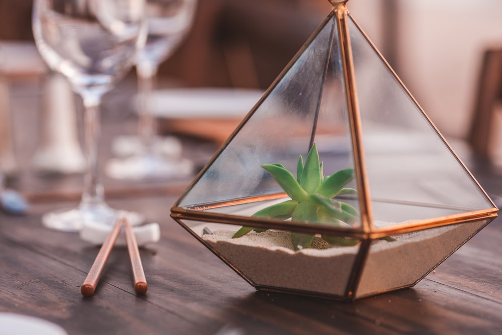green plant inside clear glass terrarium
