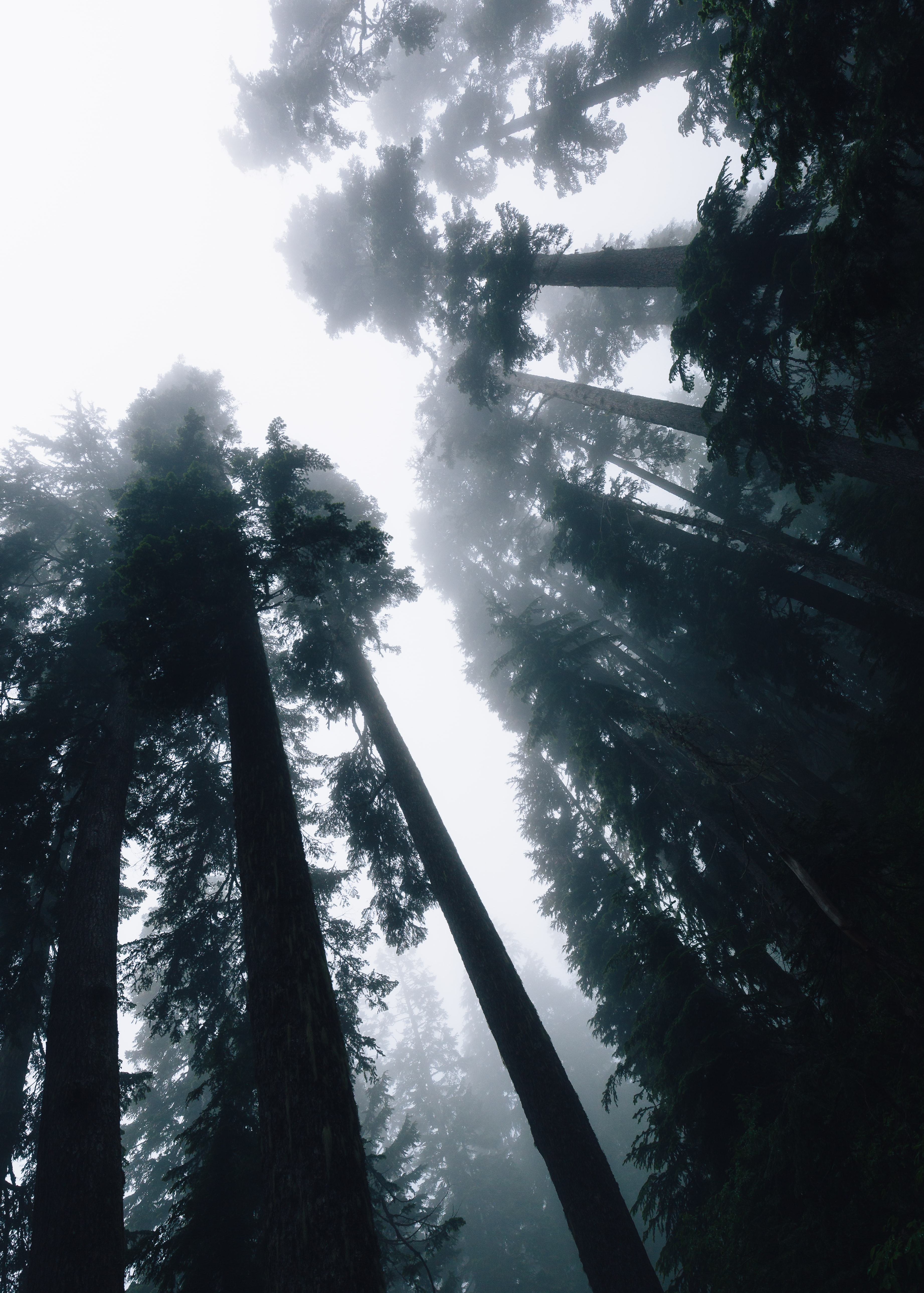 low angle photo silhouette of trees